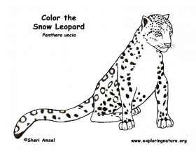 images of leopards