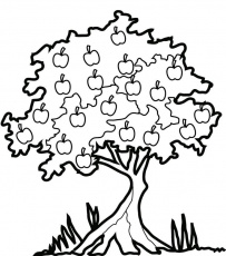 apple tree many fruit coloring page tree coloring page