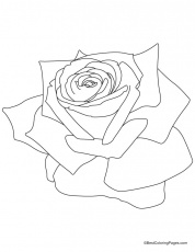 pink rose coloring page | Download Free pink rose coloring page