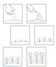 Preschool Plant Life Cycle Coloring Page