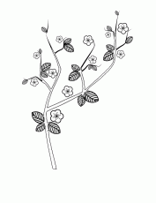 cherry tree in the spring coloring page - coloring pages for all ... - Cherry Blossom Tree Coloring Pages