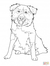 Border Collie Coloring Page