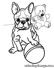 Boston Terrier Puppy Coloring Pages Best Coloring Page Site