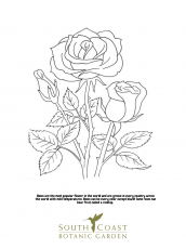 Seeds of Fun: Rose and Poppy Coloring Pages - South Coast Botanic ...