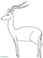 Online coloring pages Coloring page Gazelle wild animals, Coloring pages  for kids.