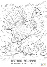 Best Photos of Wisconsin State Bird Coloring Page - Wisconsin ...