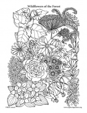 Top 47 Free Printable Flowers Coloring Pages Online Coloring Home