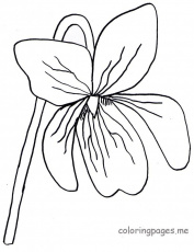 Violet-Coloring-Page-789x1024.jpg (789×1024) | Flower coloring pages, Coloring  pages, Flower drawing