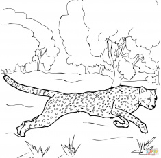 Cheetah coloring pages | Free Coloring Pages