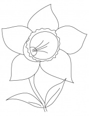 Daffodil bulb coloring page | Download Free Daffodil bulb coloring ...