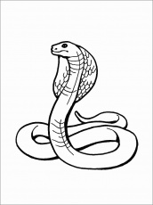 Cobra printable King cobra coloring page free printable coloring pages |  Estele.abimillepattes.com