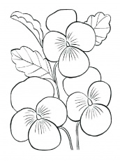 Small Flower Coloring Pages Small Flower Coloring Pages Violet | Printable  flower coloring pages, Flower coloring sheets, Coloring pictures