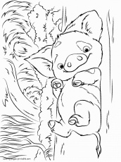 Adorable Pua Coloring Page - Free ...coloringonly.com