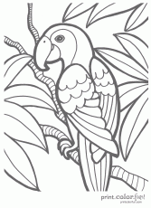 Tropical - Coloring Pages for Kids and for Adults