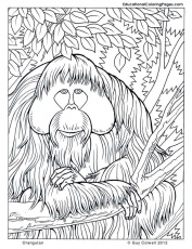 nature coloring pages | Animal Coloring Pages for Kids