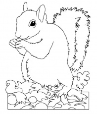 Animal Squirrel Coloring Pages | Wild Again Rescue