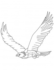 Golden eagle in flight coloring page | Download Free Golden eagle