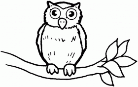 Owls Coloring Pages | Animal Coloring pages | Printable Coloring Pages