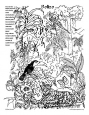 Belize Rainforest Hidden Picture and Coloring Page -- Exploring
