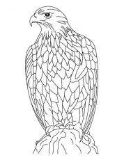 Silent golden eagle coloring page | Download Free Silent golden