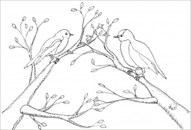 Printable Robins Coloring Page - ColoringBay