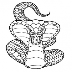 Pin by Jesushp on Arte chicano | Snake coloring pages, Snake drawing,  Animal coloring pages