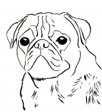 Of Pugs - Coloring Pages for Kids and for Adults
