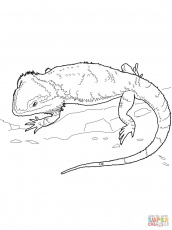 Bearded Dragon coloring page | Free Printable Coloring Pages