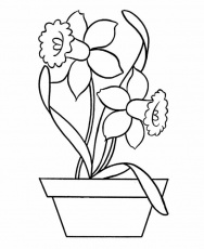 Daffodil in Pottery Coloring Page - NetArt