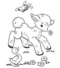 Lambs coloring pages