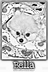 Pomeranian Coloring Page | Free Printable Coloring Pages - Coloring Home