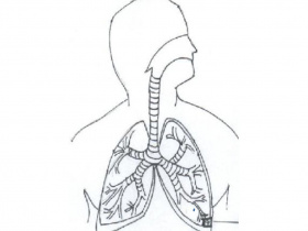 Respiratory System Coloring Page - Coloring Stylizr