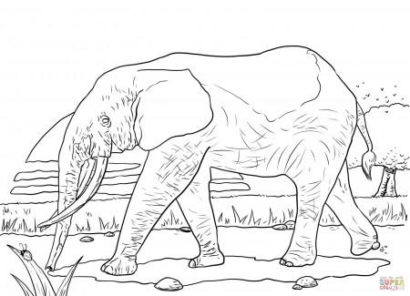 Kangaroo In Savanna Coloring Page Free Printable Coloring Pages