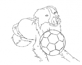 border collie coloring pages