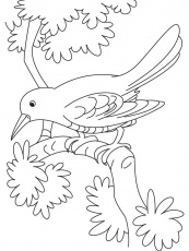 sad cuckoo bird sitting on a branch coloring page | Download Free