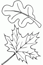 Leaf Coloring Pages To Print for Pinterest