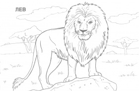 African Animals Coloring Pages Printable