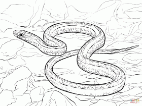 Plains Garter Snake coloring page | Free Printable Coloring Pages