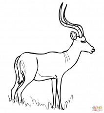 African Antelope Impala coloring page | Free Printable Coloring Pages