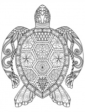 Detailed Turtle Coloring Page For Adults