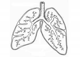 Lungs coloring worksheet | Respiratory System (Lungs) | Pinterest ...
