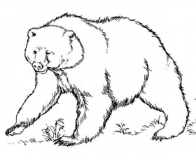 Brown Bear Ready to Fight Coloring Pages | Best Place to Color