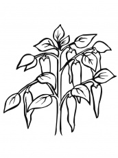 Pepper coloring pages. Download and print Pepper coloring pages