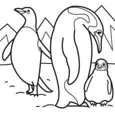 penguin family Colouring Pages