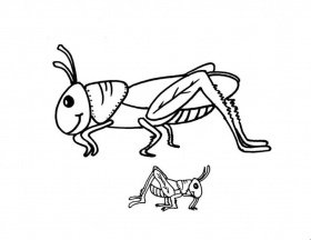 grass hopper Colouring Pages