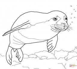 Seals coloring pages | Free Coloring Pages