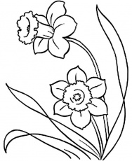 Daffodil Coloring Pages - Free Coloring Pages | Spring coloring ...