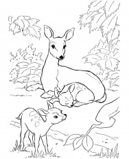 I love it! Wish I could've see it happen.......... | Deer coloring pages,  Animal coloring books, Animal coloring pages