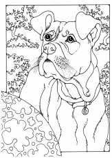 boxer dog coloring pages