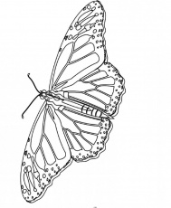 Monarch Butterfly Unique And Is Cool Coloring Page - Kids